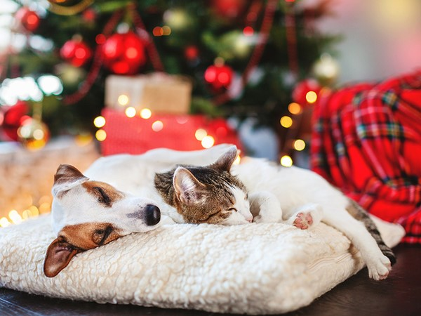PET-PROOFING YOUR CHRISTMAS TREE